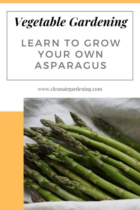 harvested asparagus with text overlay vegetable gardening learn to grow your own asparagus