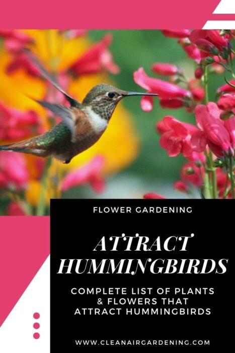 hummingbird feeding with text overlay flower gardening attract hummingbirds complete list of plants and flowers that attract hummingbirds