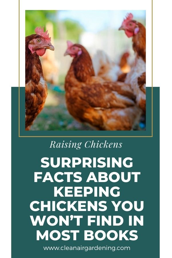 Surprising facts about raising chickens