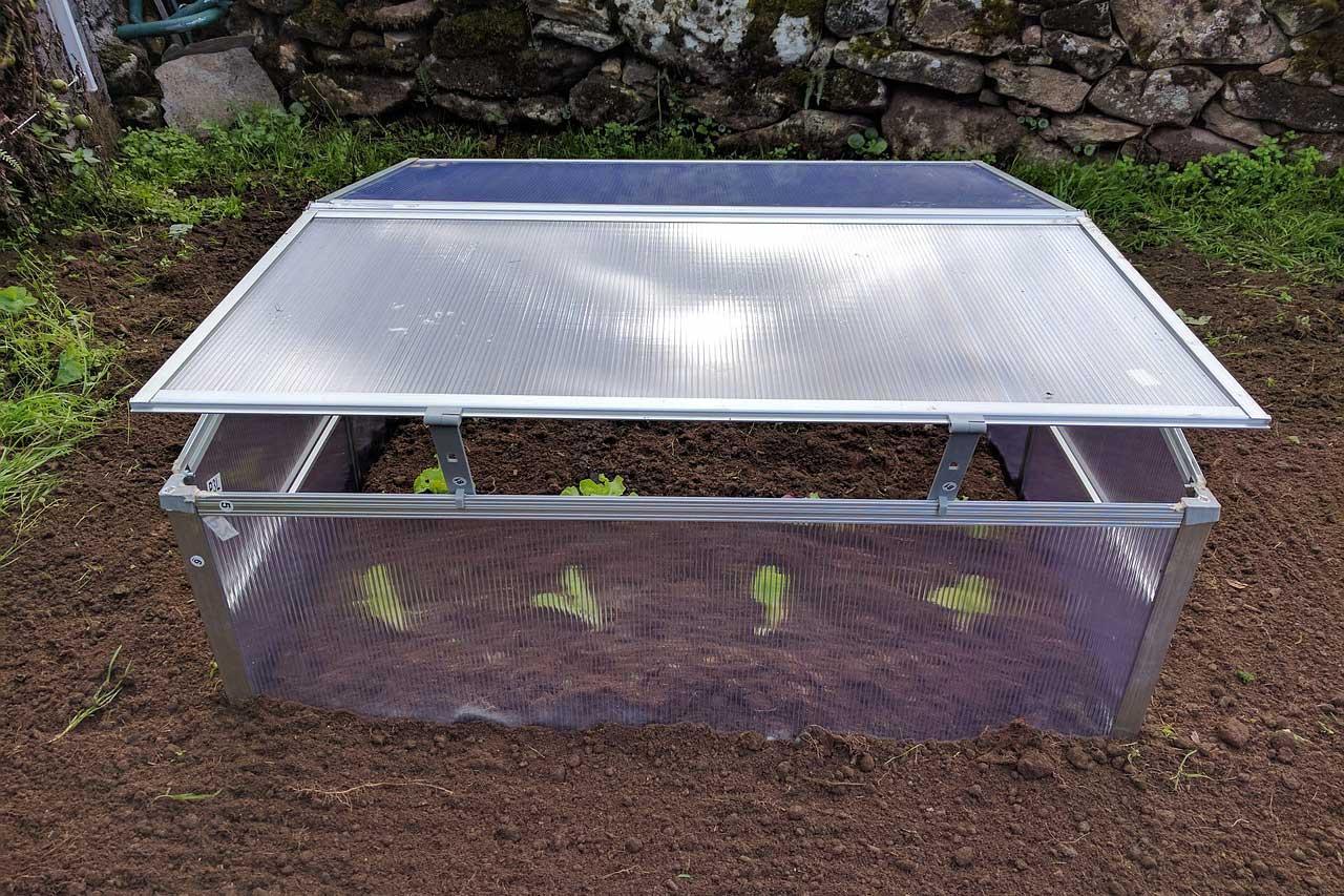 Mini Greenhouse Lettuce Orchard