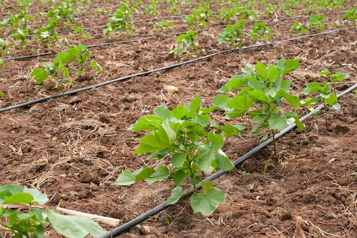 drip irrigation, recycling water reduces waste of resources