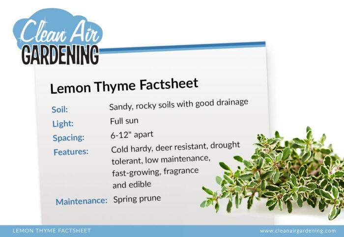 Lemon thyme factsheet