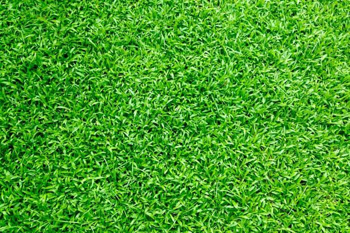 seed sun lawn garden