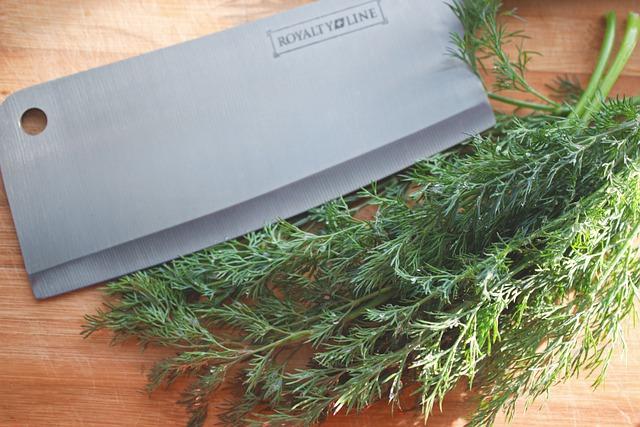 fennel herb gardening shade