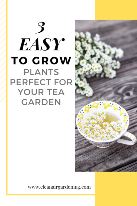 chamomile tea with text overlay three easy to grow plants perfect for your tea garden