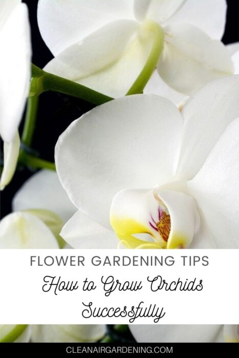 close up of orchid with text overlay flower gardening tips how to grow orchids successfully