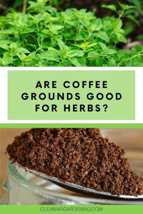 oregano and coffee grounds with text overlay are coffee grounds good for herbs