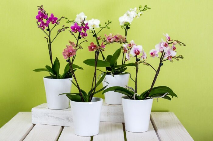 orchids growing in containers