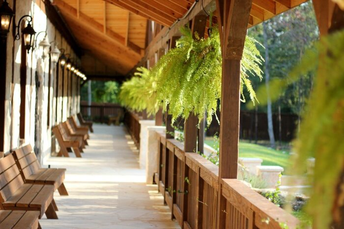 ferns on a porch