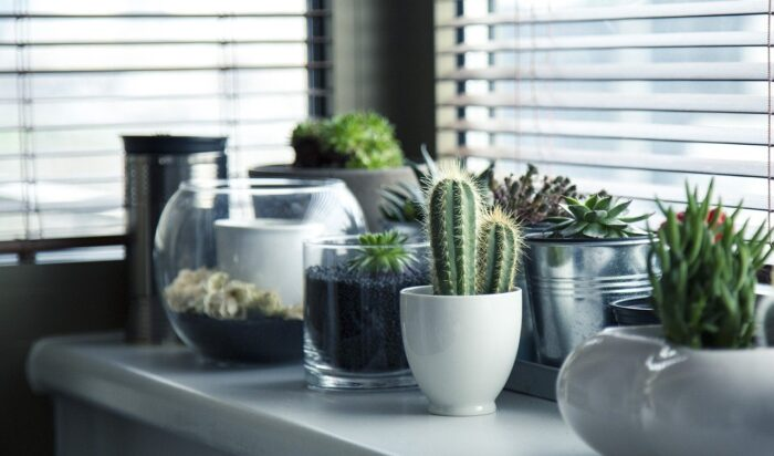indoor cactus and succulent plants in containers