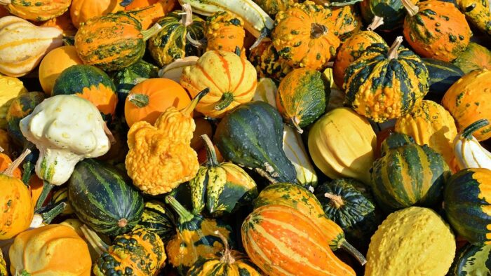 pumpkin types and varieties come in many sizes and shapes
