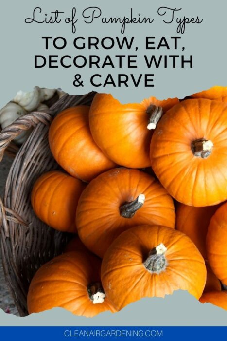 pumpkins in basket with text overlay list of pumpkin types to grow eat decorate with and carve