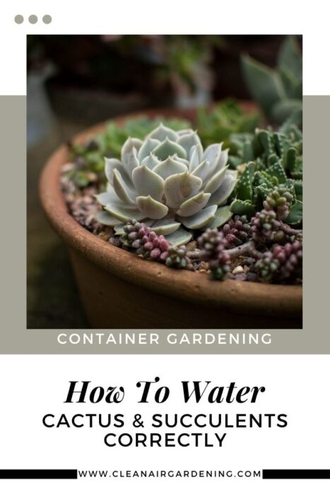 container succulents with text overlay container gardening how to water cactus and succulents correctly